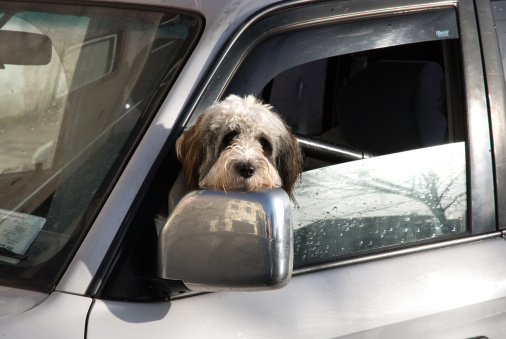 837 Safety Laws On Children, Pets, and Vehicles